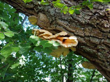 Permalink auf:Baumkontrolle